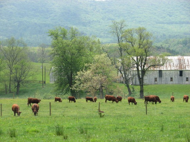 Cattle Ranch - New Castle, VA